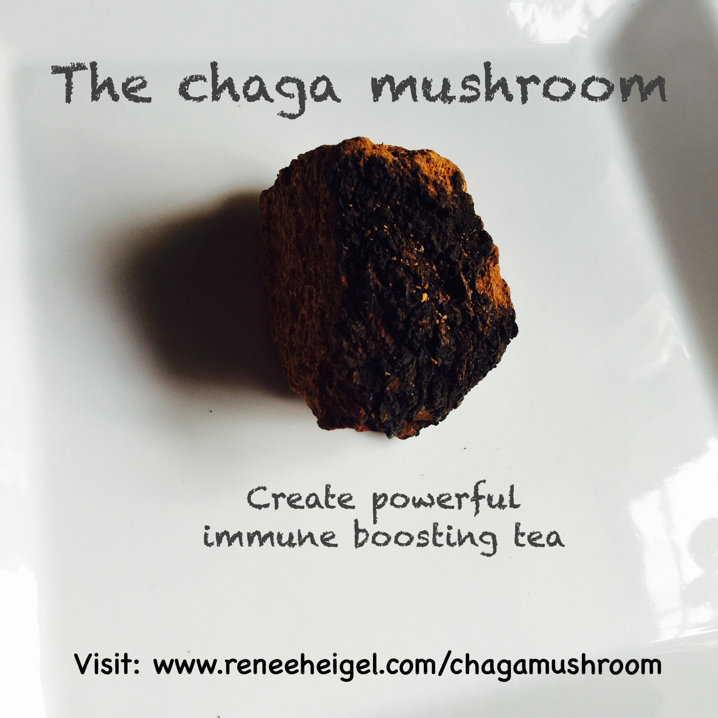 Chaga Mushroom: Immune Enhancing Superfood